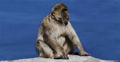 O que os macacos comem.