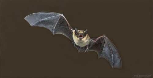 O que os morcegos comem.