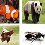 Descubra o que os animais onívoros comem