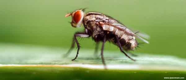 O que as moscas comem.