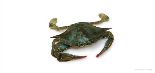 O que o caranguejo navalheira come