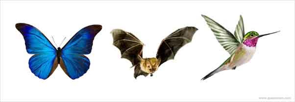 O que os animais nectarívoros comem