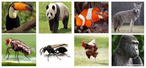 O que os animais onívoros comem