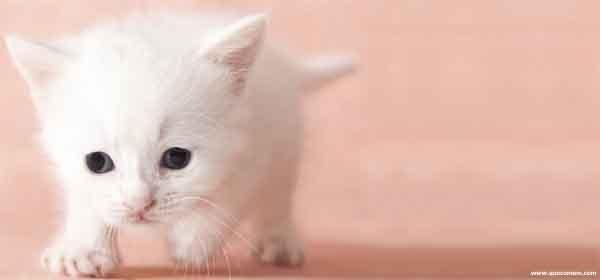 O que os filhotes de gatos comem.