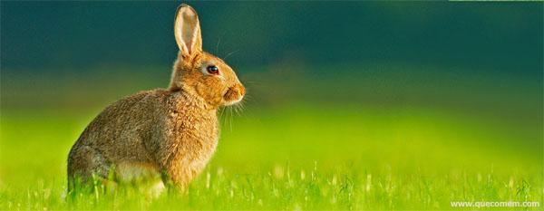 Alimentos que fazem o coelho usar os dentes