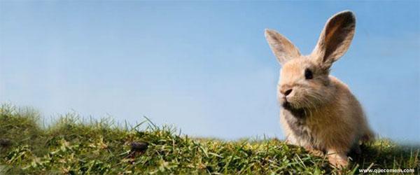 As necessidades nutricionais do coelho
