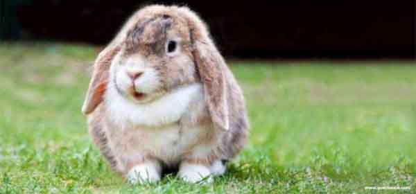 Dieta de coelho na prática