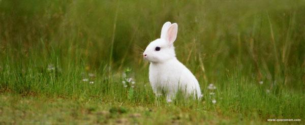Frutas legumes e plantas adequadas para coelhos