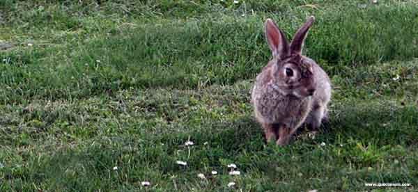 O que os coelhos comem