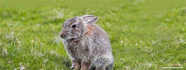 O que os coelhos precisam evitar de comer