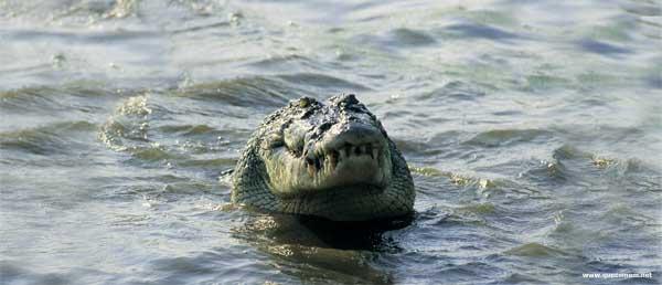O que os crocodilos comem