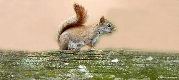 O que os esquilos comem