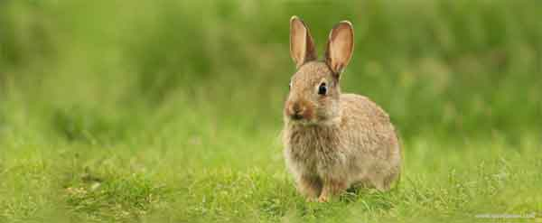 Quanto e quando um coelho deve comer
