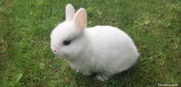O que os coelhos anões comem